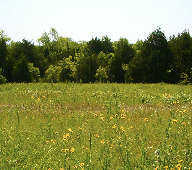 The prairie with wildflowers and evergreen trees lining the back