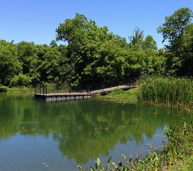 Pond at Heard