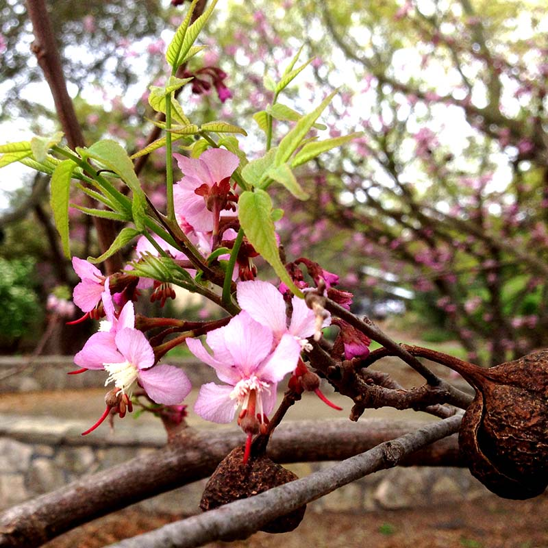 Beautiful pink flower blooming in the native plant garden
