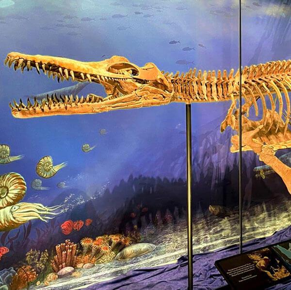 Texas Nessie Plesiosaur